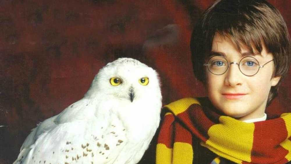 The 30 Greatest Harry Potter (And Fantastic Beasts