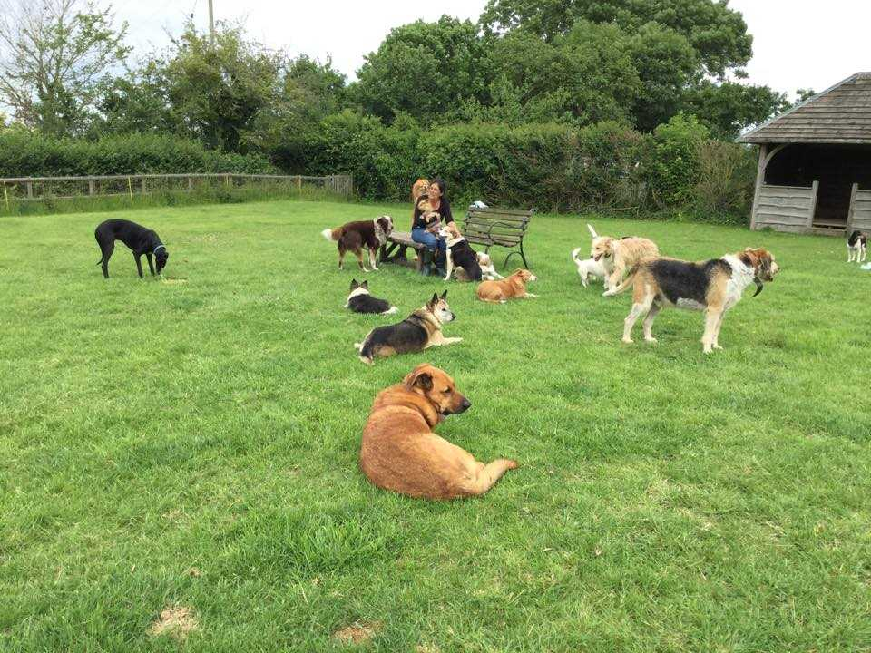CINDI HAS MADE IT HER MISSION TO HELP SOME OF THE DOGS
