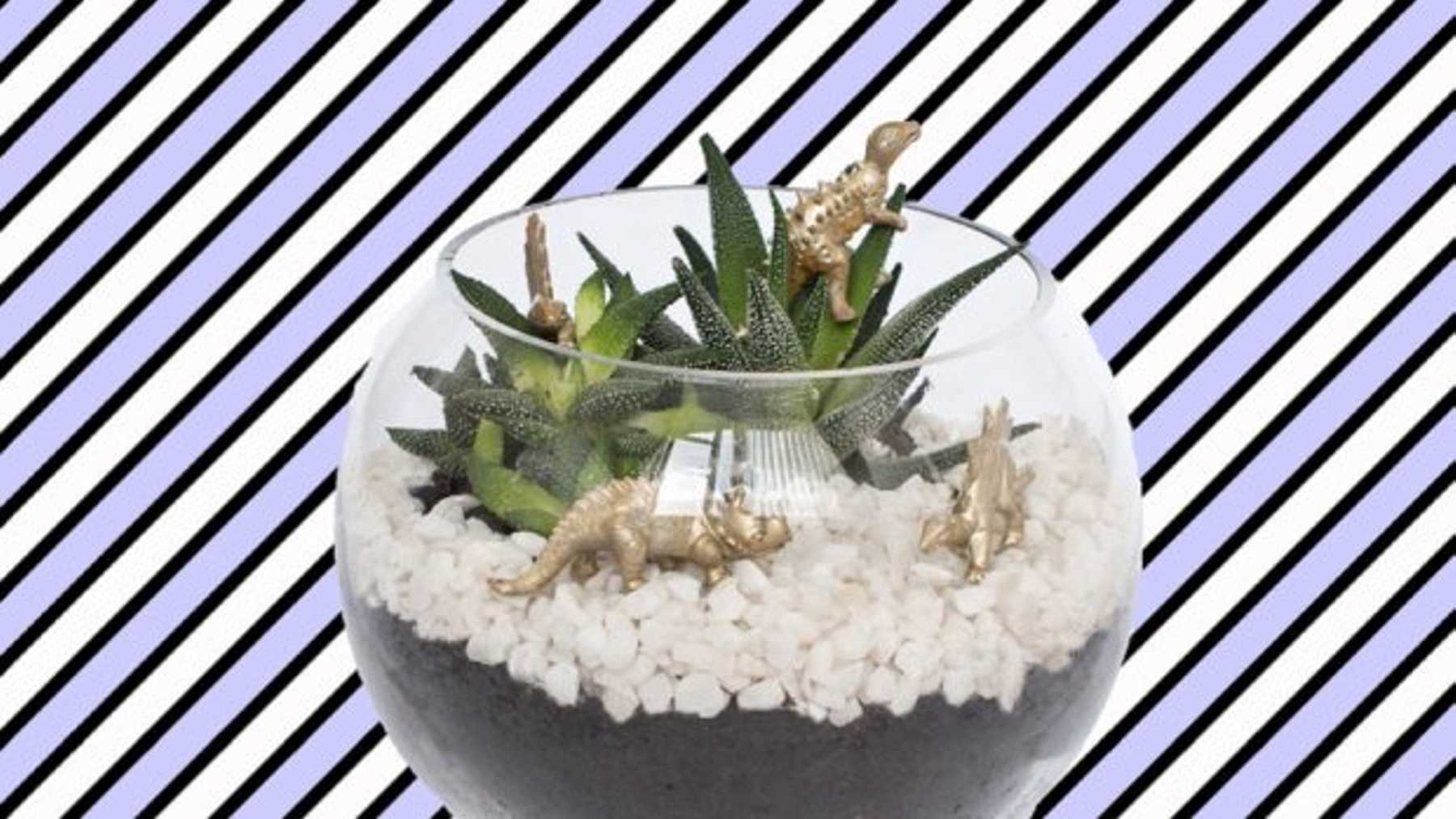How To Make A Terrarium For Under A Tenner Grazia