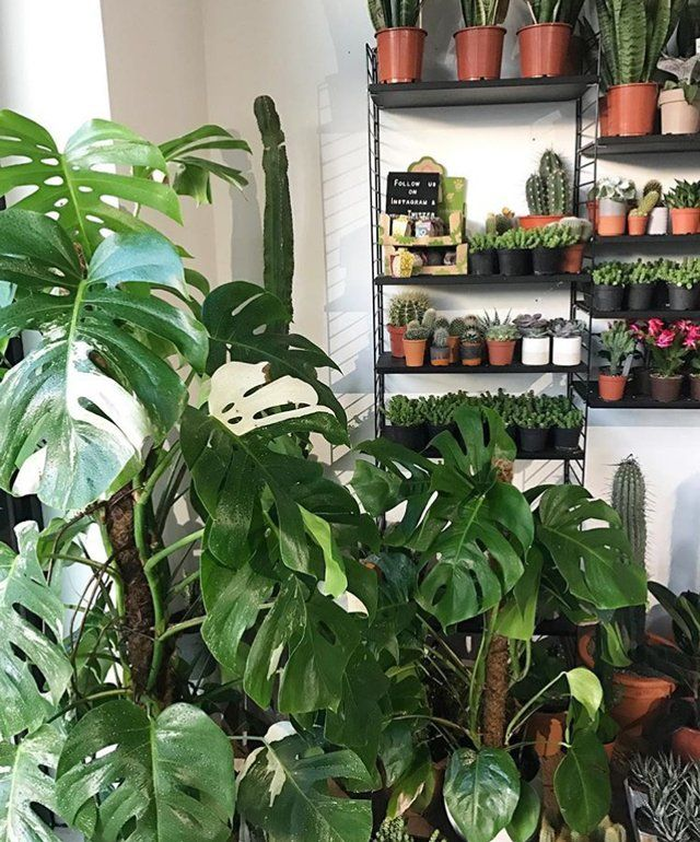 How Not To Kill Your Houseplants In The Winter | Grazia
