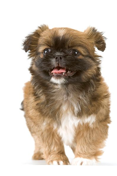 Dog name inspiration: 180 cute names for your puppy | Closer