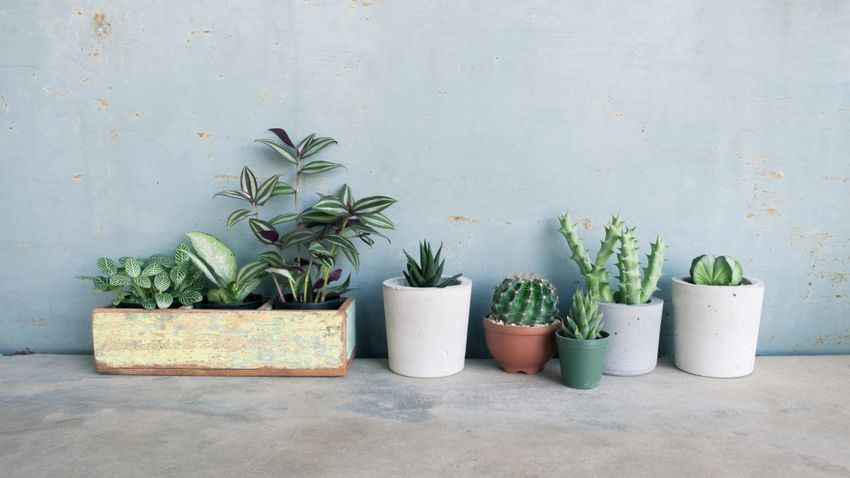 7 Houseplants That Are Super Easy To Grow Yourself Grazia,French Country Style Interior Design Bedroom