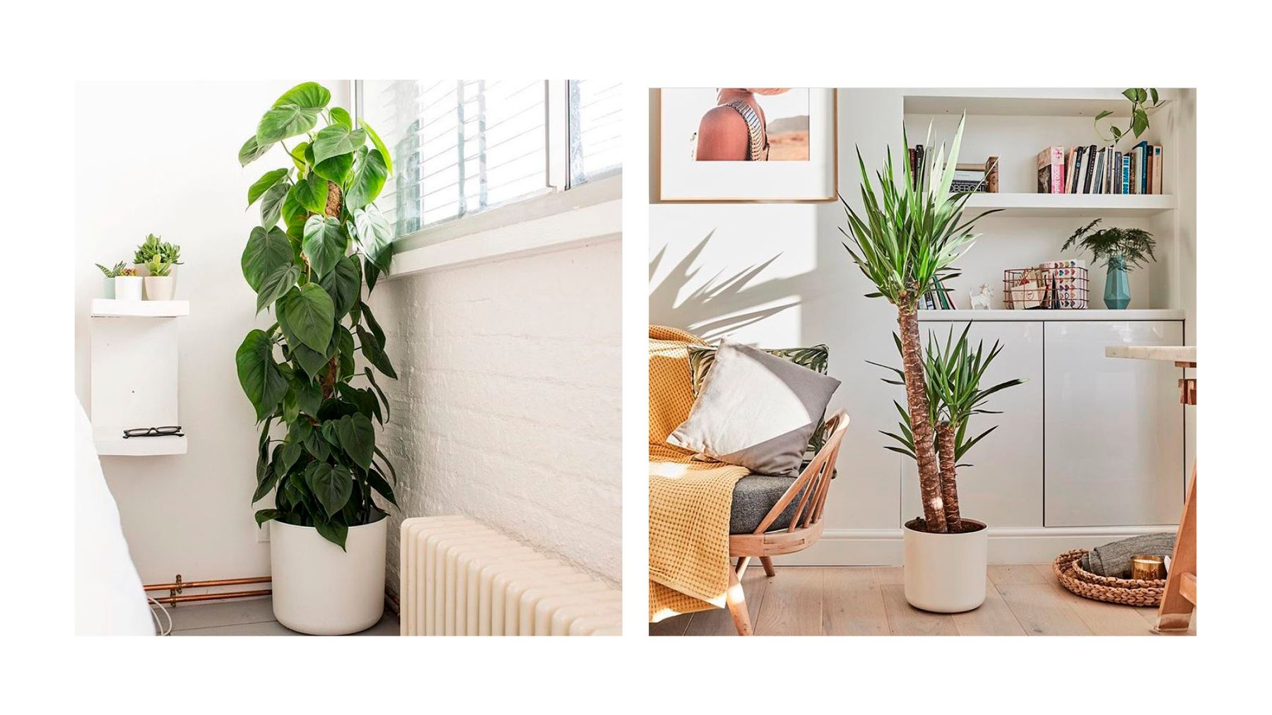 Here S Where To Buy Cool Houseplants Online Grazia
