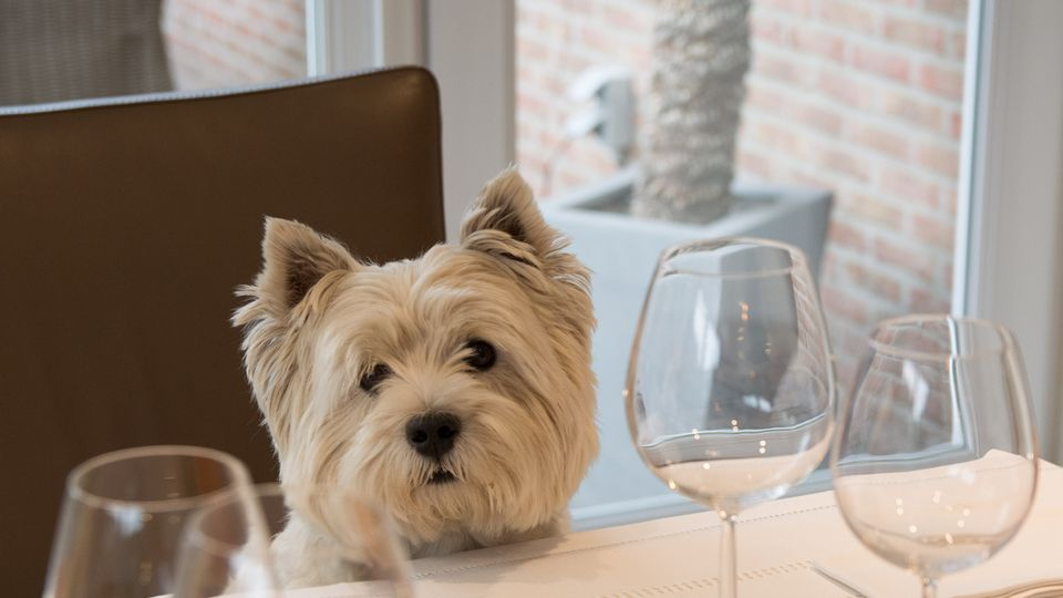 Guide to the best dog-friendly places to eat in Birmingham