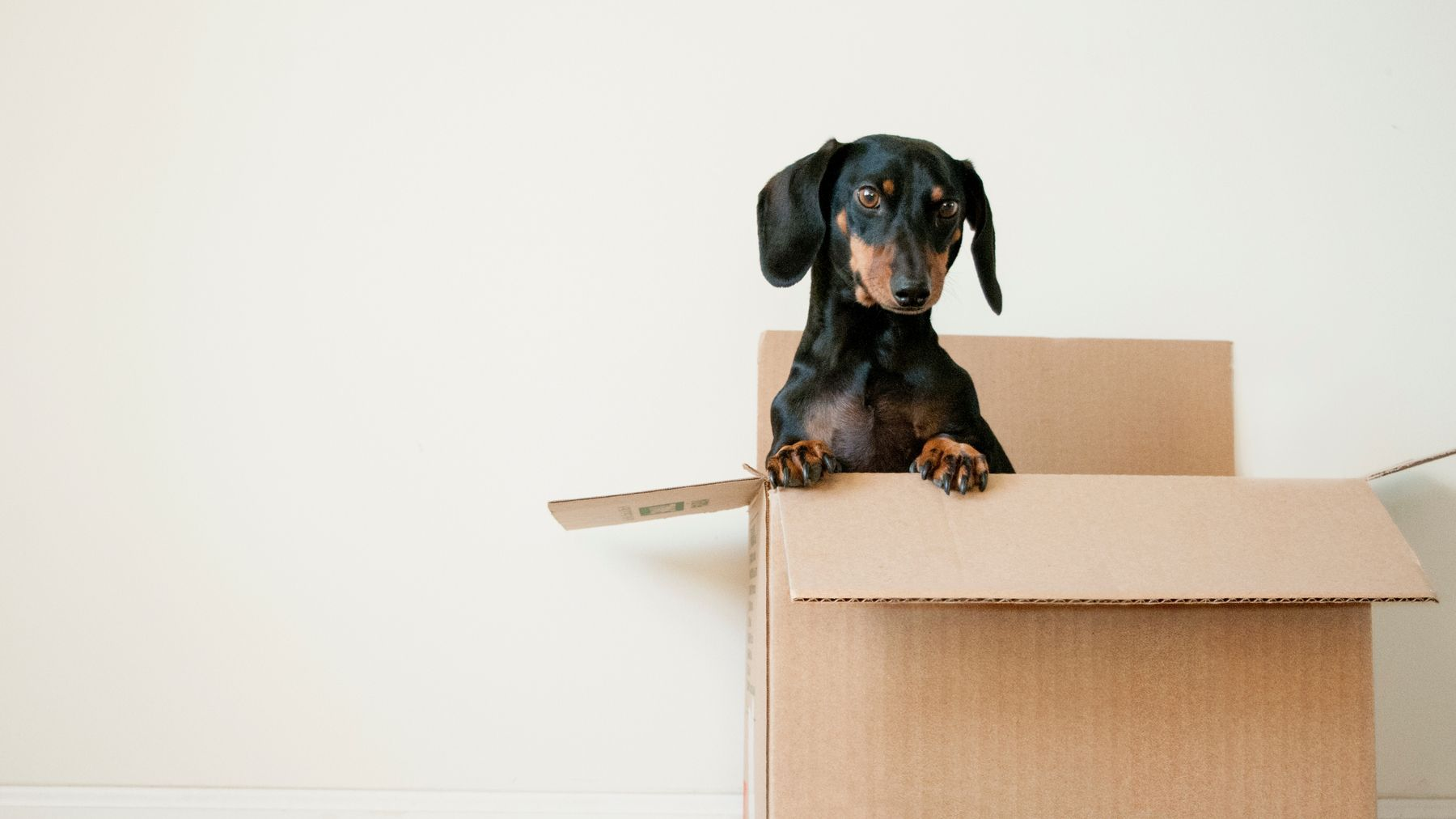 10 Hot Questions To Ask Before Buying A Pet | Grazia