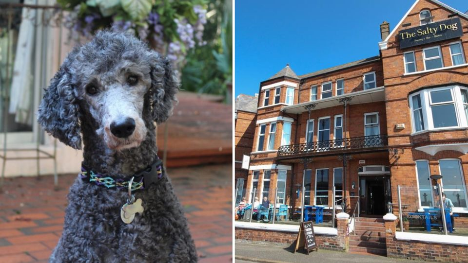 10 Pawesome Dog Friendly Hotels In Northern Ireland Places To
