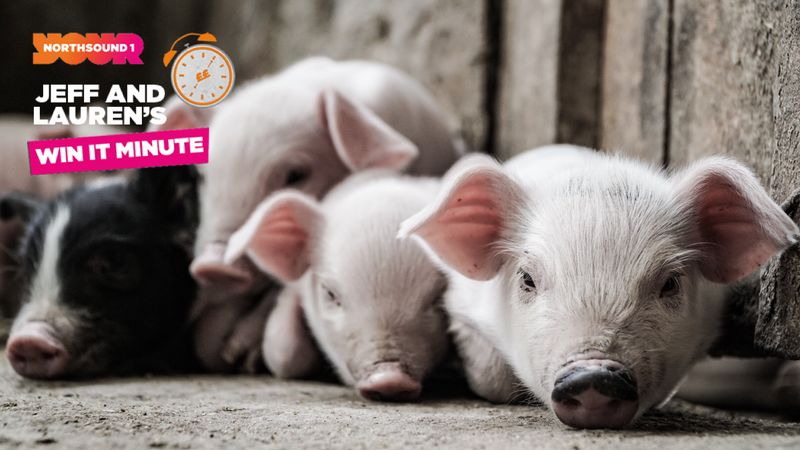 In offshore terminology, what does the P in PIG stand for?
