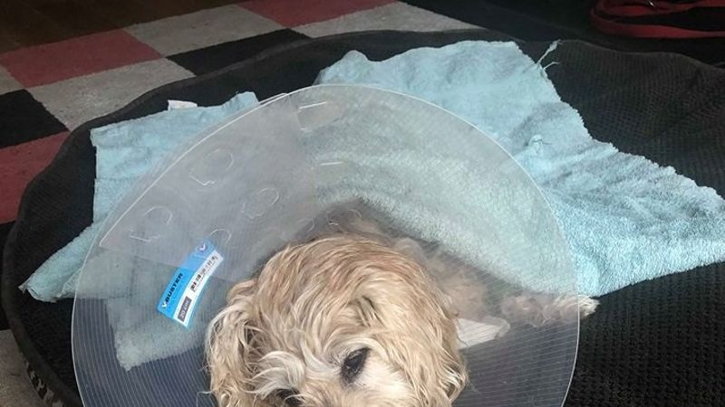 Wirral woman and dog injured in German Shepherd attack