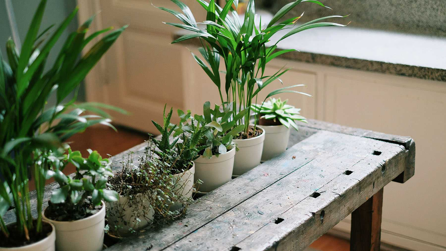 Awesome The Best Rustic Plant Pots Home Whats The Best Home Remodeling Inspirations Basidirectenergyitoicom