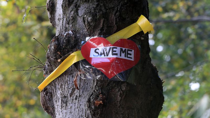 Yellow ribbons tied round trees in Partick in protest against flat plans