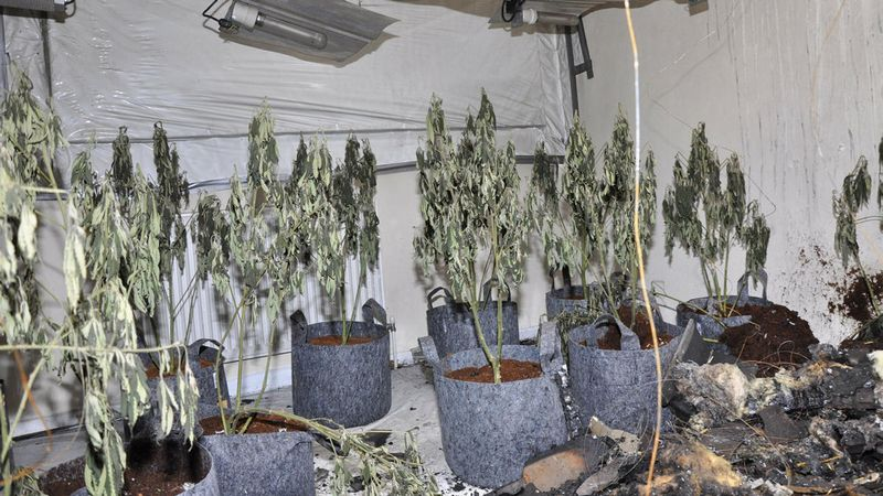 Woman and baby affected by St Helens cannabis blaze