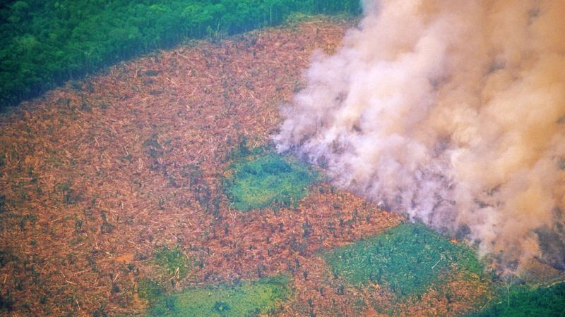 What Caused The Amazon Rainforest Fire And How Can I Help Stop Deforestation?