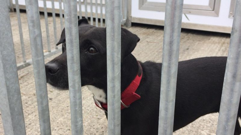 Fresh appeal to save Ayrshire dog home from closure