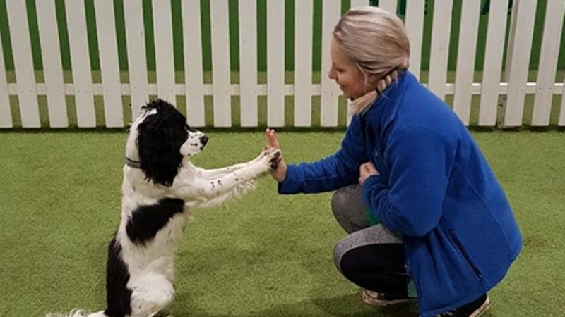 Dogs Playpark closes 'with a very heavy heart'