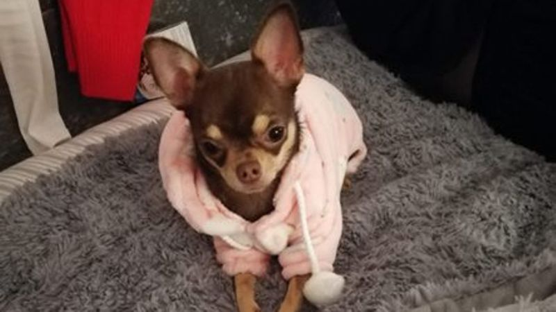 Glasgow woman robbed of dog at knife point