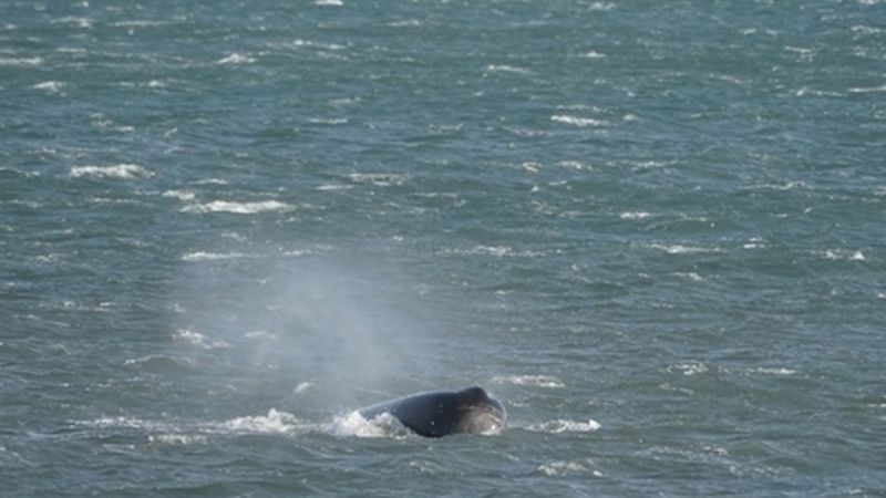 Concern for Sperm whale spotted off Northumberland Coast