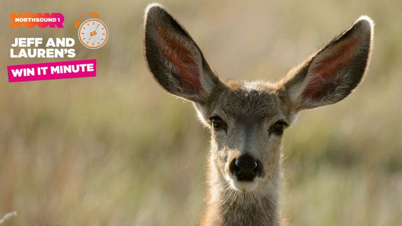 Win it Minute: What is a female deer called?