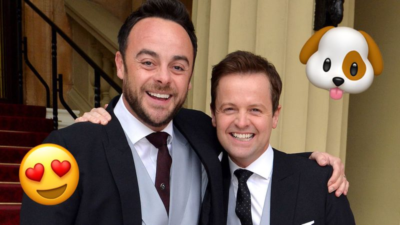 Ant and Dec cuddle namesake puppies in adorable new photo �