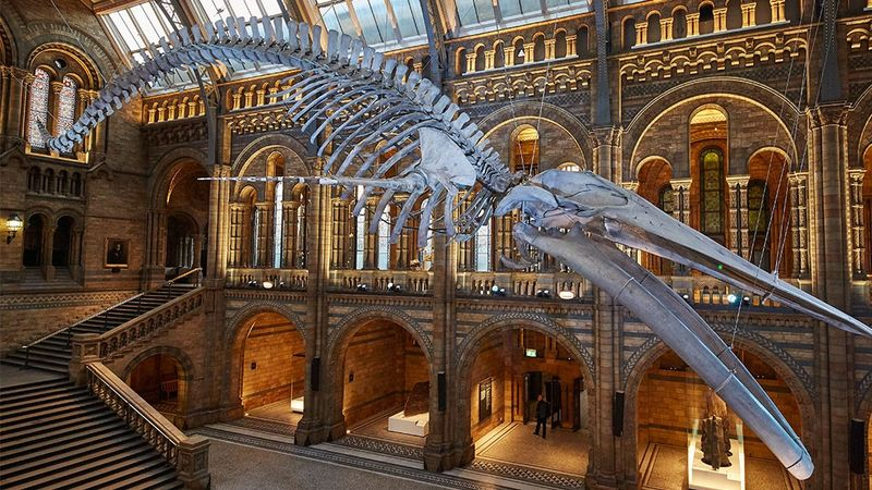 Last moments of Britain's favourite Blue Whale revealed