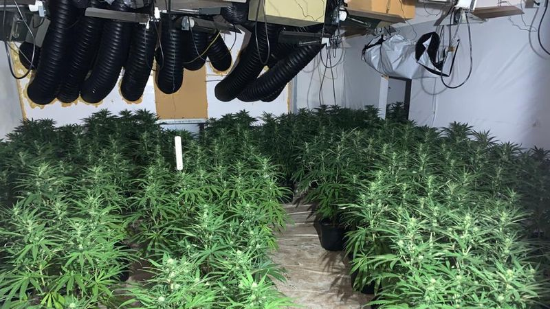 A million pounds worth of Cannabis seized in Gateshead