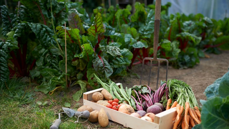 How To Grow Vegetables, Even In Isolation