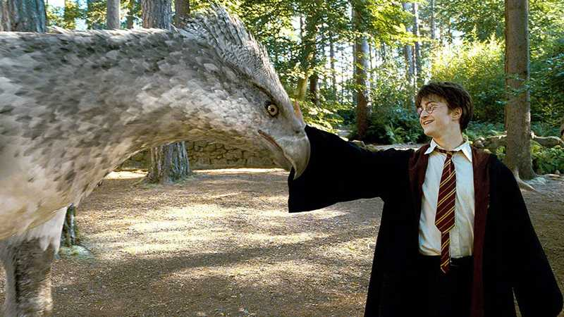 Every Harry Potter And Fantastic Beasts Movie Ranked Movies Empire