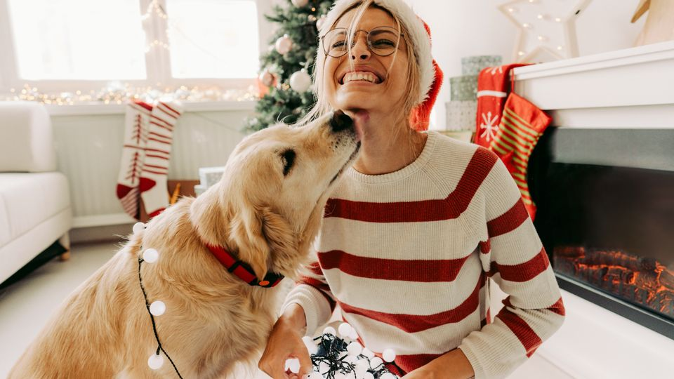 Christmas gift guide: What to buy pets and pet lovers