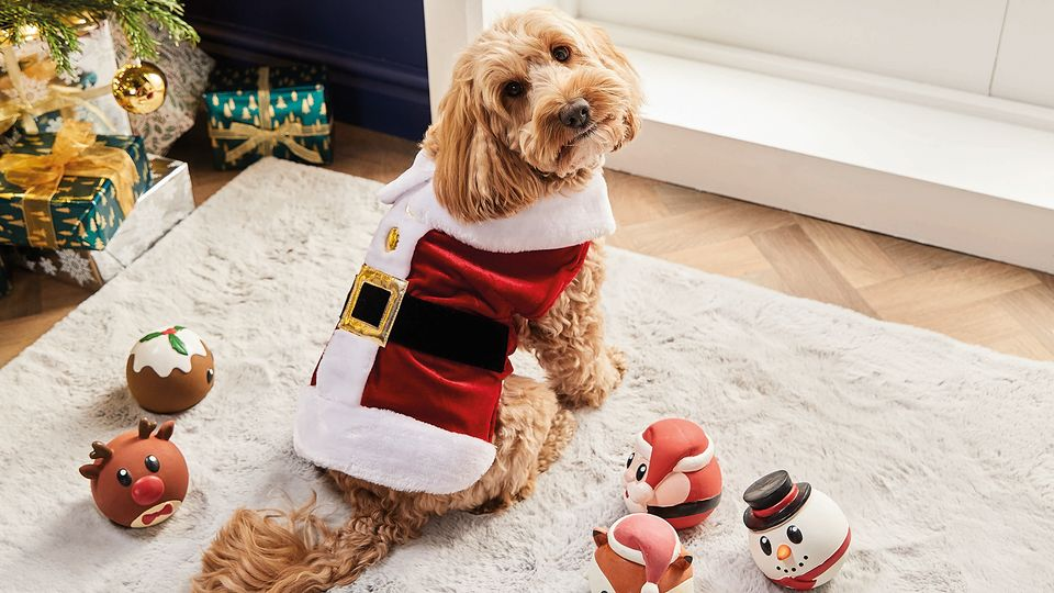 Christmas Jumpers For Your Pets? Aldi Have Got You Covered