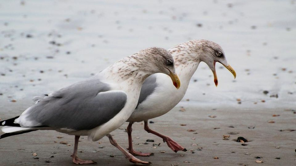 D&G Council can remove gull eggs from your property   Local